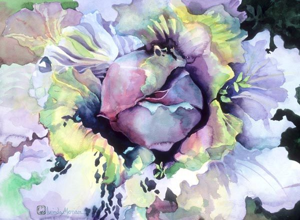 still life cabbage watercolour web Cabbage Lucinda Hayes