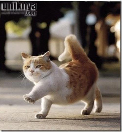 Kucing adalah salah satu hewan di dunia ini, yang lazim menjadi binatang peliharaan umat manusia. Sifatnya yang penurut dan lucu, menjadikan hewan ini banyak disukai tua dan muda. Berikut adalah beberapa foto bayi kucing yang lucu!