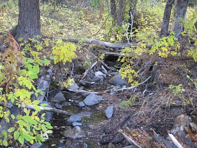 September 2007, a trickling stream on the meadow