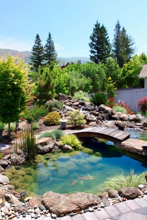 Japanese Garden with koi pond. Ami Saunders, MLA