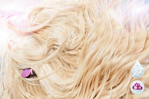 # Hair Care for Dogs