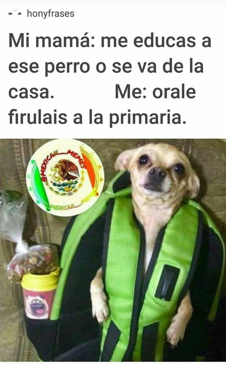 Memes In 2021 Funny Spanish Memes Memes Animal Memes