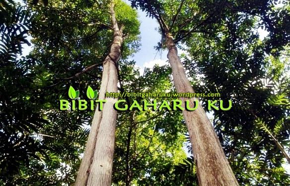 http://bibitgaharuku.wordpress.com
