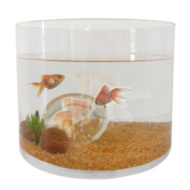 1000 id es sur le th me animalerie poisson sur pinterest for Aquarium poisson rouge taille
