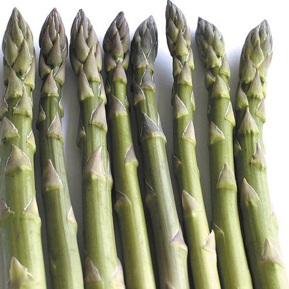 Asparagus Seeds  PACIFIC 2000  Gmo Free Hardy Variety