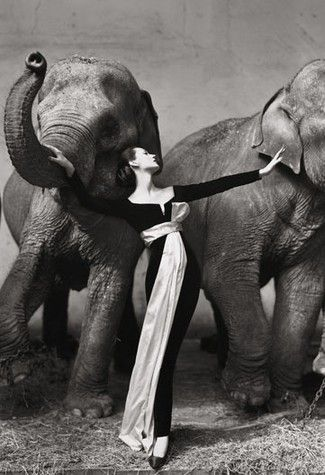 Dovima and Avedon and Elephants. This photo was taken in August 1955  in Paris at the  Cirque d'Hiver. Dovima is wearing the first evening dress designed by Christian Dior's new assistant Yves Saint Laurent.