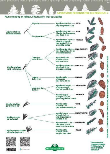 clé de détermination foret | ONF - Reconnaître les arbres : deux clés de détermination papier