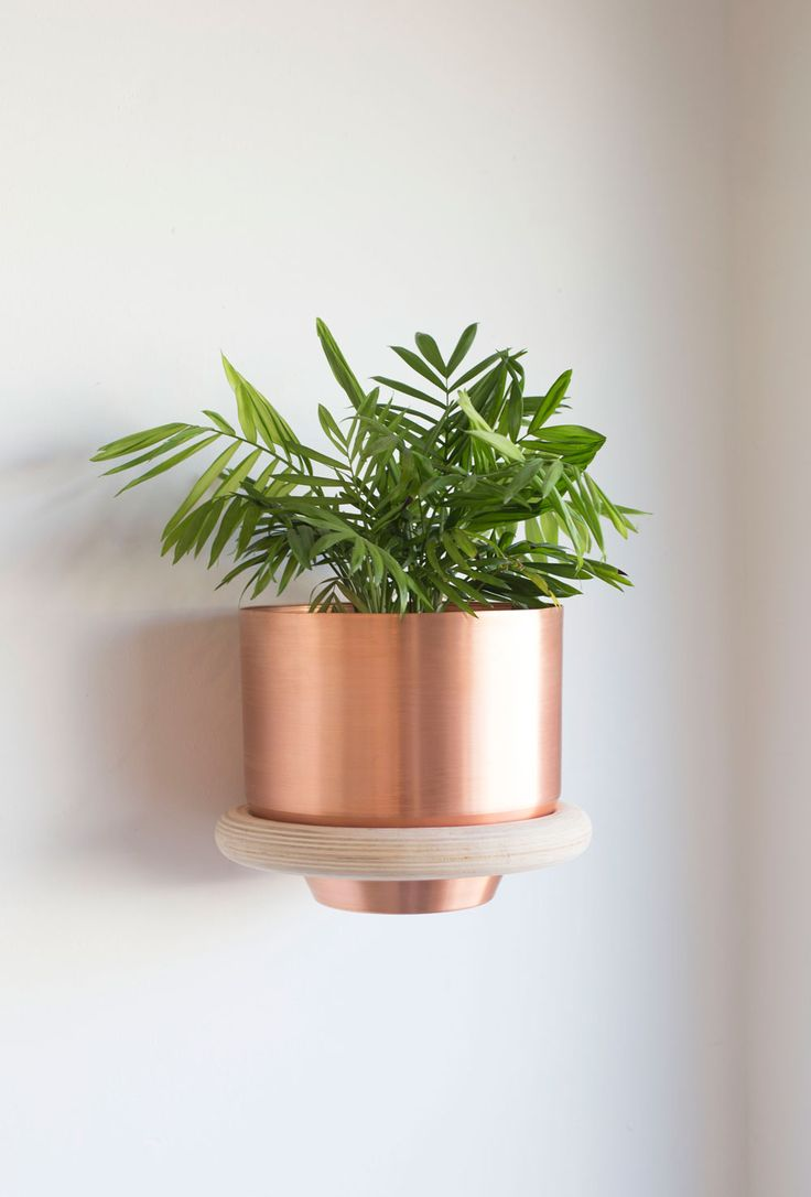The 25+ best Wall mounted planters ideas on Pinterest ...