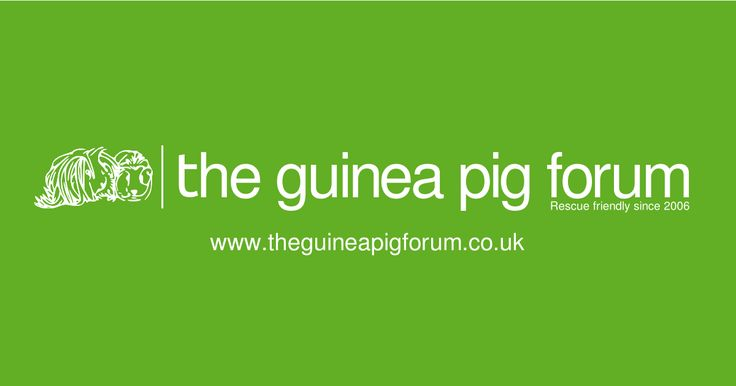 What your Guinea Pig needs.  Getting guinea pigs is an exciting time! Here is a list of items you will need for the arrival of your New Guinea Pigs   A...