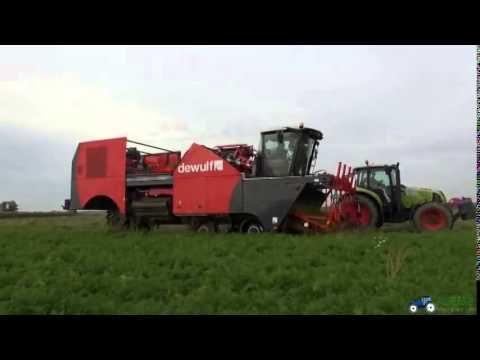 Dewulf ZKIV 4 row self propelled carrot harvester