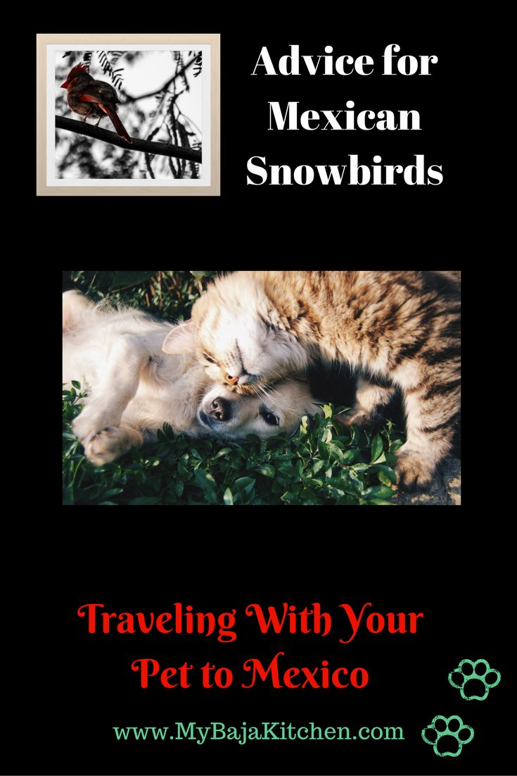 #Traveling with your pet to Mexico. Advice for #Snowbirds and #Expats. Know before you go.