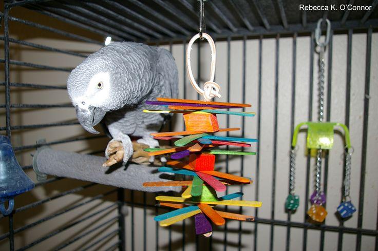 Homemade Parakeet Food Recipe