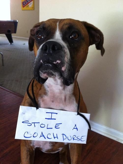 This website is hilarious and full of guilty dog pictures.