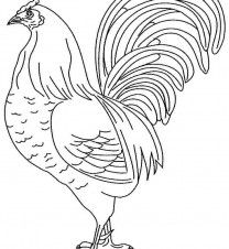 printable rooster coloring pages printable free animal rooster coloring sheets for little kids 28898