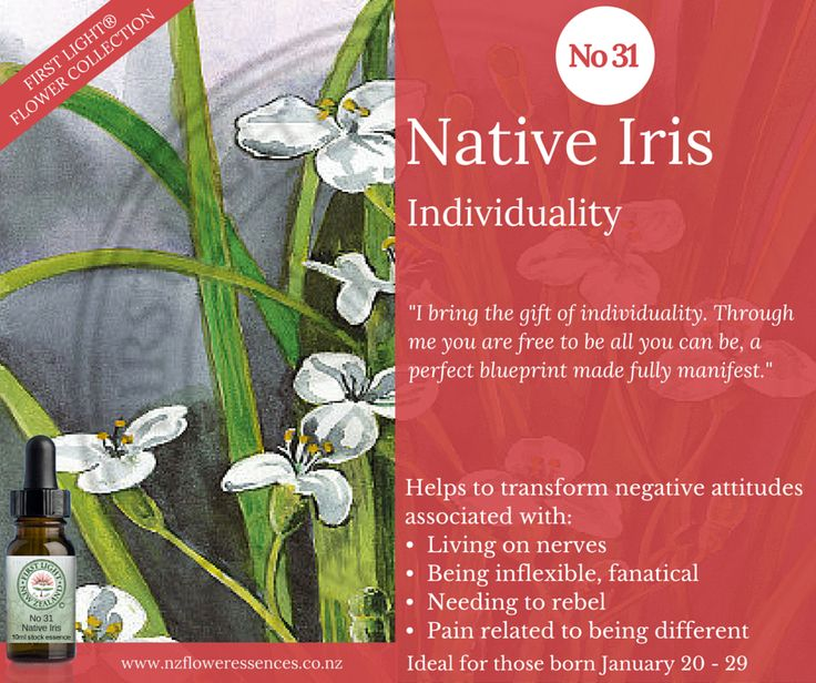 Native Iris - Individuality - helps you to find your own way and your own sense of individuality. It assists you to be liberated from the restriction or definition of who others think you are. Helpful for those who may have experienced any form of subtle mind control or had to conform to another's reality. Supports you to discover your own individuality as distinct from your role as partner, spouse, child, parent, employee etc.