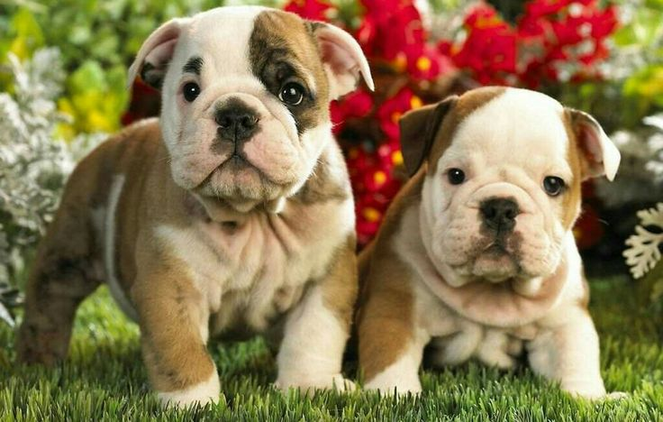 Here are the cutest puppies ever