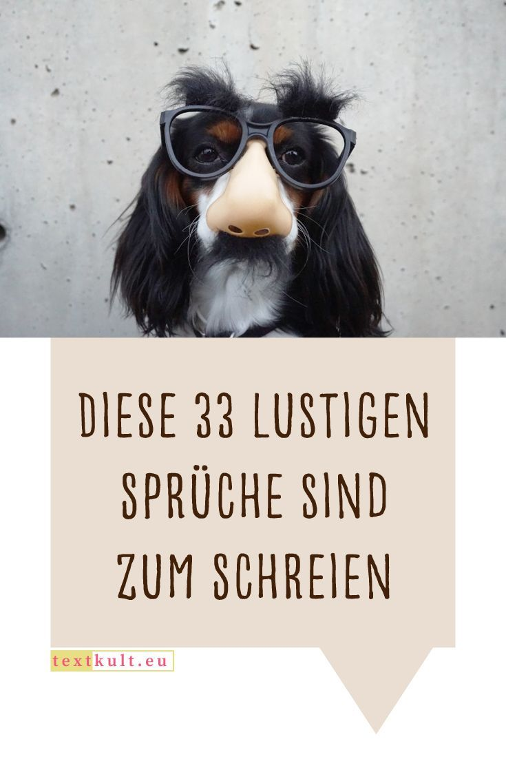 Diese 33 Lustigen Sprche Sind Zum Schreien Lustig Lachen Witzig