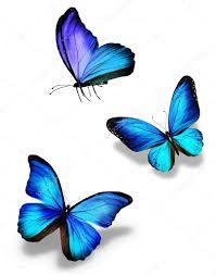 Resultado de imagen para fotos mariposas azules
