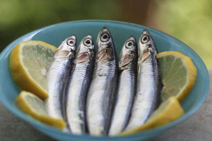 Guida al pesce azzurro