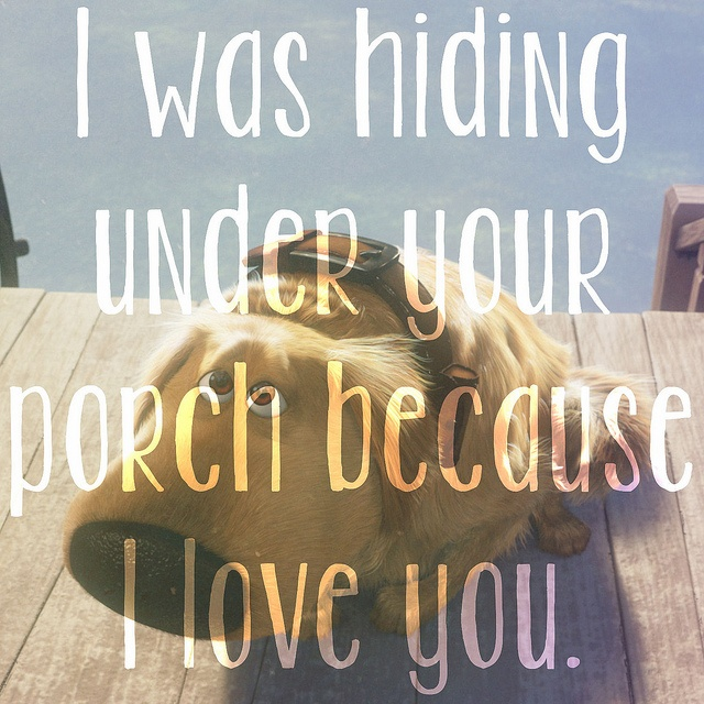 i was hiding under your porch because i love you by michellee♥, via Flickr