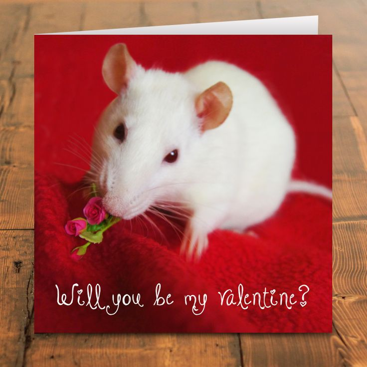 18 best images about Rat lovers greetings cards – Hamster Valentine Cards