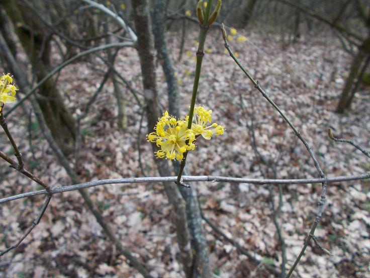 virágzó fa <3