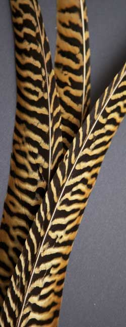 Am-Gold Pheasant | Am-Gold Tail Feathers | Classic Salmon Viazacie materiály
