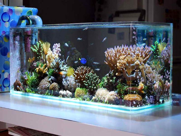 Indoor, Cool Saltwater Aquarium Design Ideas Picture: Saltwater