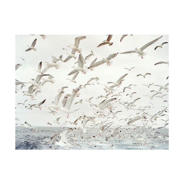 beach | Tumblr found on Polyvore: At The Beaches, Beauty Birds, Beaches Life, The Ocean, Coastal Styles, The Waves, Happy Weekend, Anna Maria Islands, Animal
