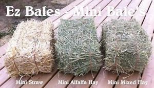 Mini Hay & Mini Straw bales for sale Calgary Alberta image 4