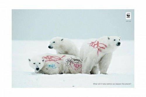 wwf ours blanc neige grafiti pub