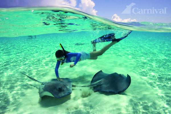 Catching some underwater rays. #Cruise #Animal #Cute #Stingray