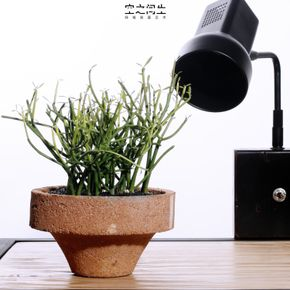 Amazing Plant Pots, Potted Plants, Indoor Plants, Flower Pots, Inside Plants, Pot  Plants, Indoor House Plants, Potted Trees