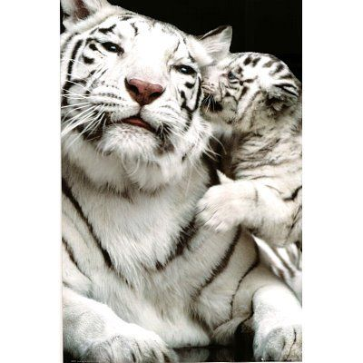 White Siberian Tiger Cubs | Details about White Siberian Tiger with Baby Tiger Cub Animal Print ...