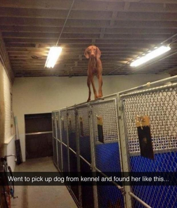 Dump A Day Funny Animal Pictures Of The Day - 27 Pics