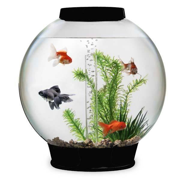 aquarium tipps kleines aqarium einrichtungsbeispiele aquarium