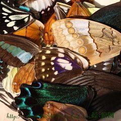 [Special] Разнообразие бабочки крылья стеклонаполнитель DIY аксессуары ювелирные изделия ручной работы (0234X)