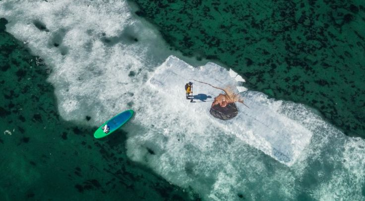 ENG – Painting Murals On Water and Melting Arctic Iceberg: Hula / Sean Yoro (Hawai)