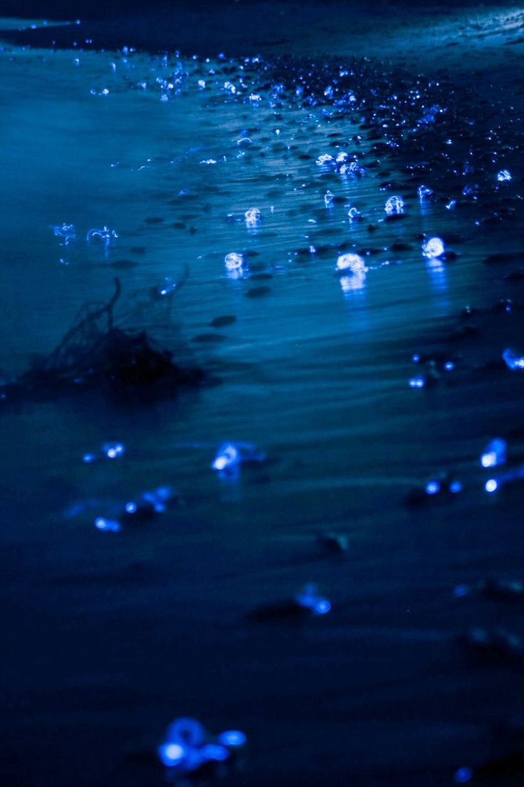 This is what happens on the earth. In spring, but not every year, bioluminescent firefly squid illuminate the Toyama Bay, Japan.  As I live in the city, you may think it is easy for me to encounter the phenomena, but it's not.