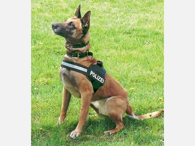 polizei | k9 working dogs | Pinterest