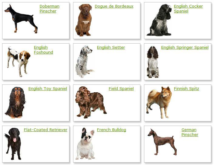 MOST BEAUTIFUL DOG BREEDS IN THE WORLD, BEAUTIFUL DOG BREEDS, Dog breeds, dog breed, dog, beautiful dog, amazing dog, awesome dog, most beautiful dog Pomeranian, Siberian Husky, Golden Retriever, Akita Inu, Bernese Mountain Dog, Icelandic Lamb Dog, Miniature Schnauzer, Chow Chow, Alaskan Malamute, Beagle,  #MOSTBEAUTIFULDOGBREEDSINTHEWORLD #BEAUTIFULDOGBREEDS #Dogbreeds #dogbreed #dog #beautifuldog #amazingdog #awesomedog #mostbeautifuldog #Pomeranian #SiberianHusky #GoldenRetriever…