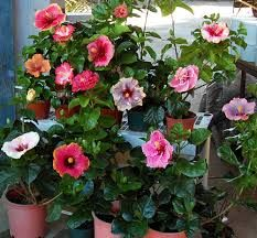 Image result for bushes shrubs and plants