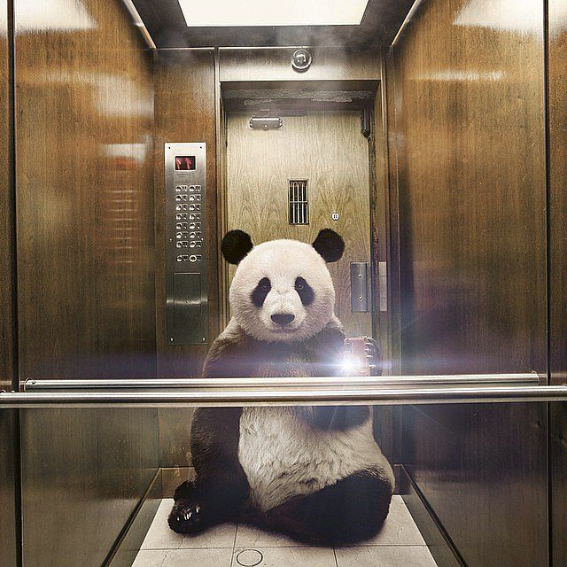 21 Animal Selfies That Are Shutting It Down :Panda Pic