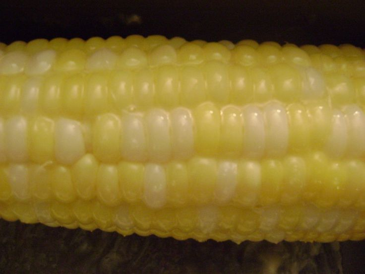 The BEST corn on the cob that you will ever eat. Seriously.