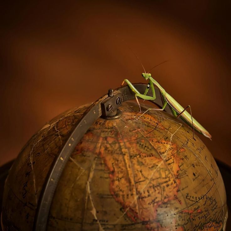 """""""Run the world""""  let's find all your story on it . #politics #war #corruption #globalization #terrorism #disinformation #pollution #racism ..."""