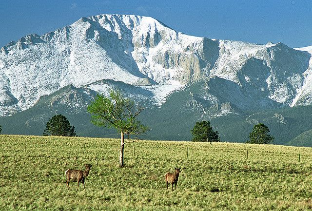 Pikes Peak and Cow Elk: East of Woodland Park, #Colorado (CO) by Floyd Muad'Dib, via Flickr