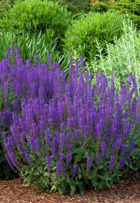 25 best ideas about low maintenance landscaping on for Low maintenance summer flowers