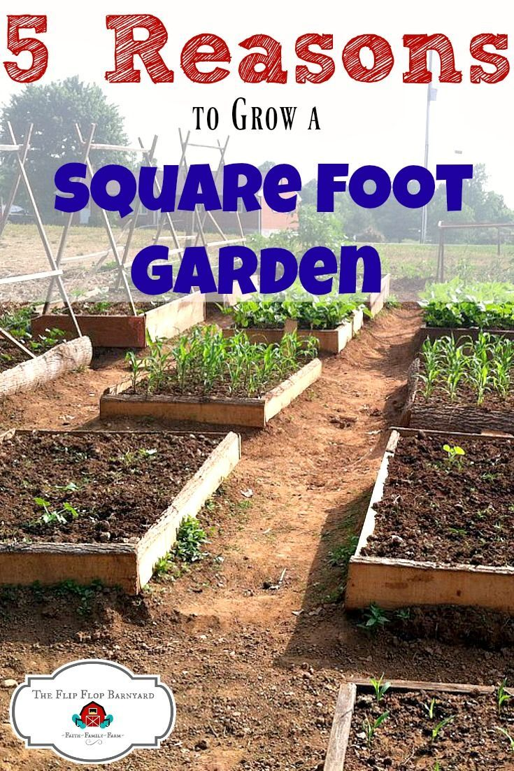 Here are 5 great reasons to grow a square foot garden. A square foot garden is a great way to have homegrown vegetables. You can grow so much produce in much less space when you implement the square foot gardening method. via @BarnyardJen