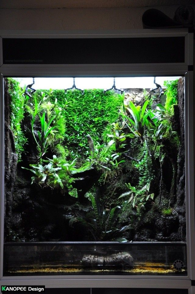 Terrarium Tropical Humide By Quot Le Pelu Quot Page 4 Planted