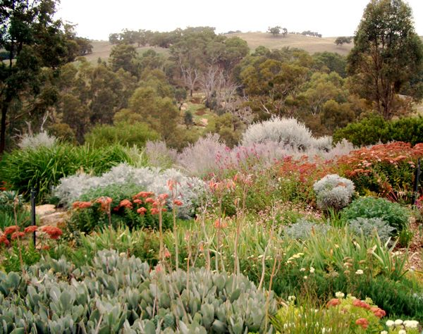 more native plants
